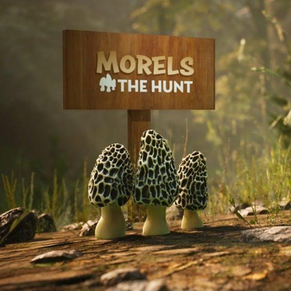 Morels The Hunt